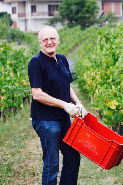 Grape Harvest 2016 - 15