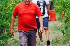 Grape Harvest 2016 - 13