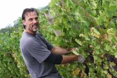 Grape Harvest 2016 - 6