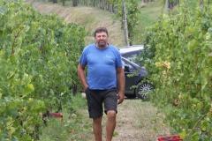 Grape Harvest 2016 - 8