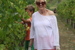 Grape Harvest 2016 - 9