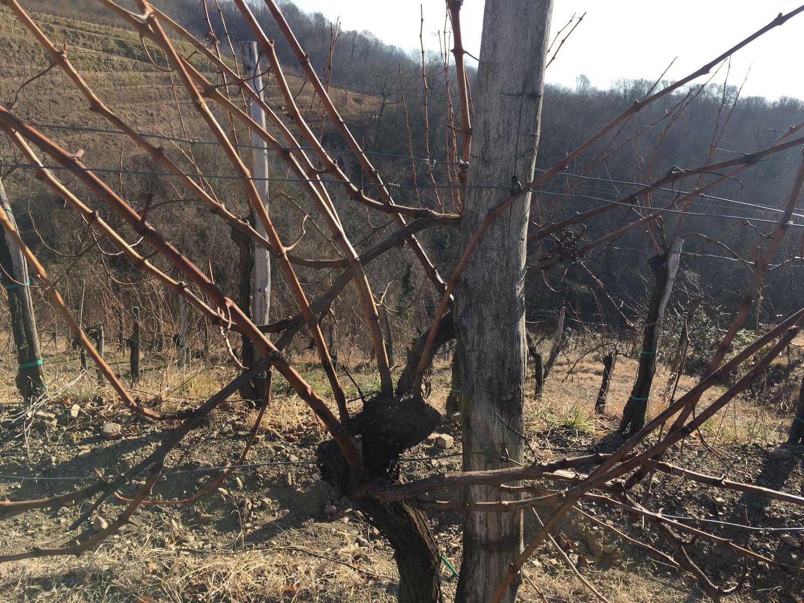 Vigna Santa Valeria Wines