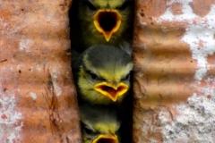 Uccellini 1